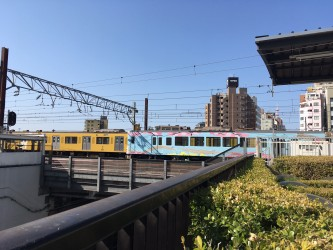 左が普通の黄色い電車